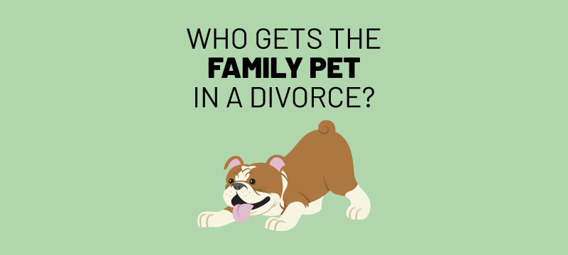 who gets the pets in divorce?